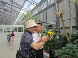 掛川花鳥園で手に持っている餌をついばみに来たインコ